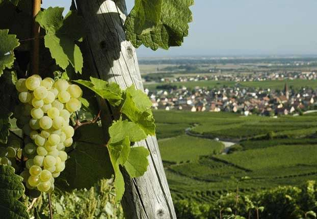 Vins nature